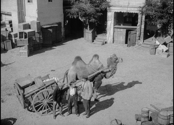 The heroic camel in The Self-Seeker