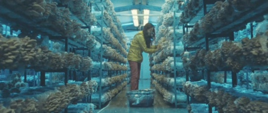 Li-fei at the mushroom farm
