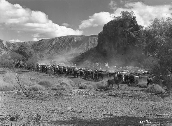 The spectacular cattle drive